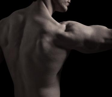 Rückenmuskulatur stützt und stabilisiert die Wirbelsäule