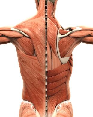 Faszien Ursache von Rückenbeschwerden